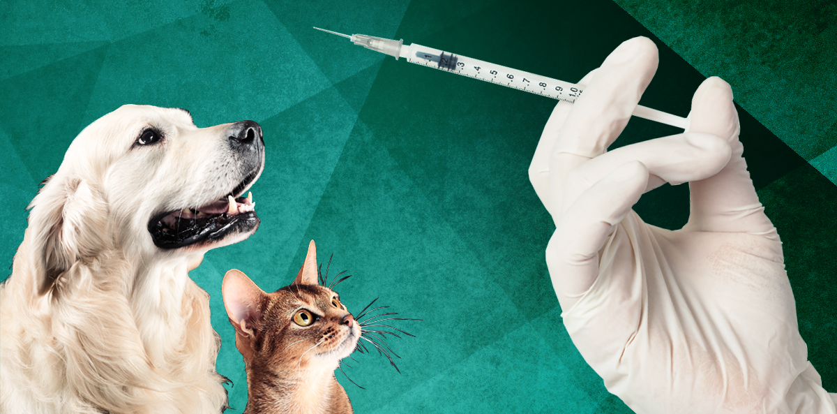cat and dog over green background with hand holding insulin syringe